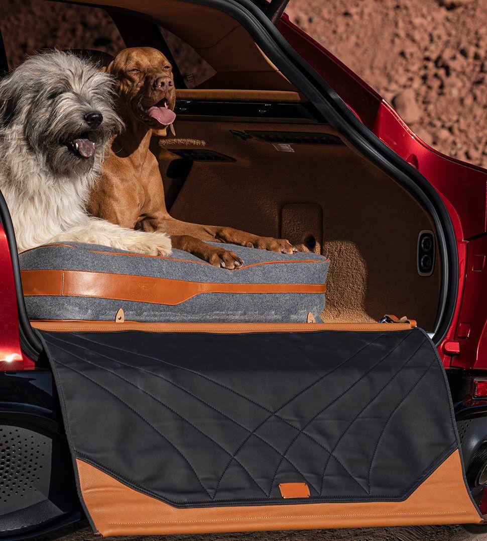 Aston Martin DBX Kofferraum mit Hunden
